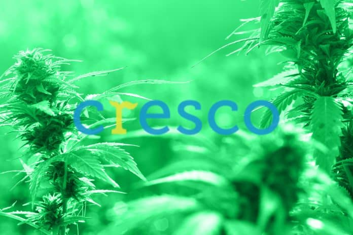 cresco-labs-cbd-market-cl